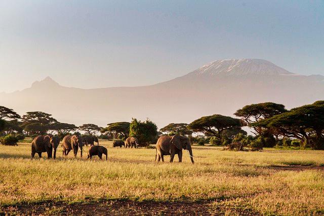 1-quenia-elefantes