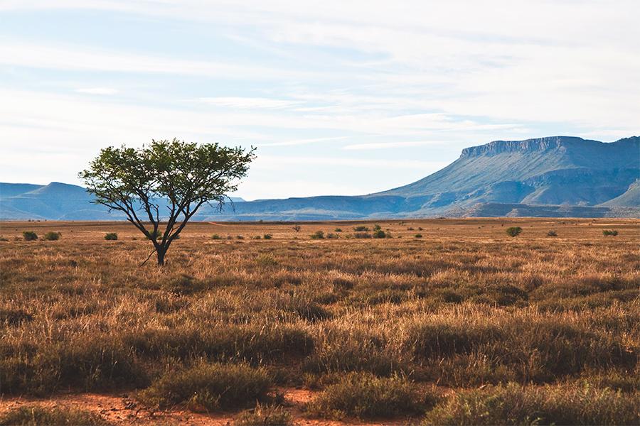 5-safari-na-africa-do-sul