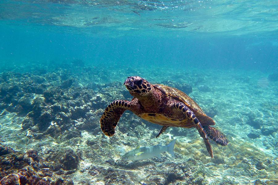 3-tartaruga-marinha