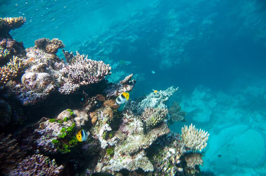 2-mergulho-fiji