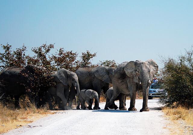 3-safari-etosha