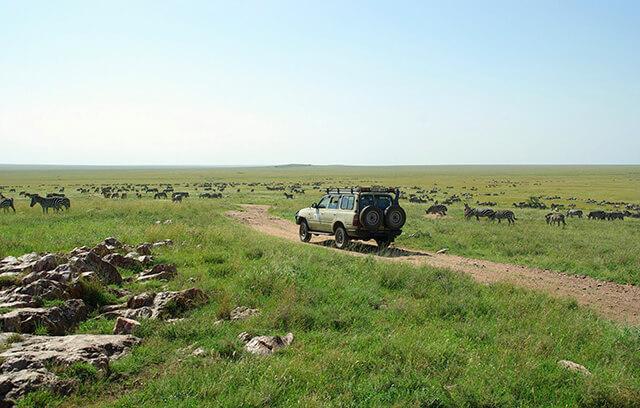 1-safari-masai-mara