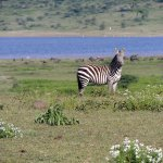 Quênia e Tanzânia