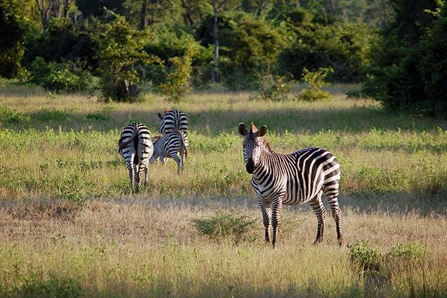 2-parque-nacional-luangwa