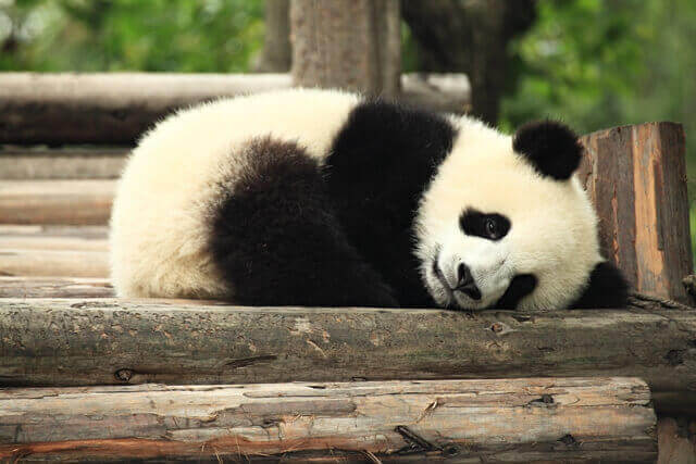 2-panda