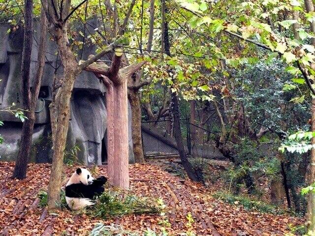 1-panda-em-parque