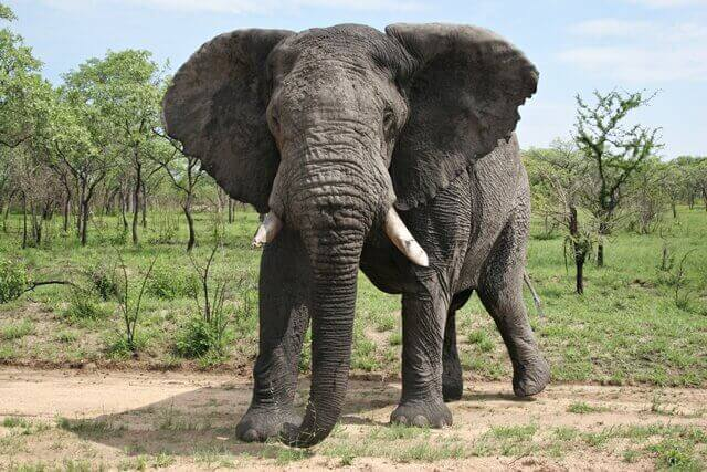 3-elefante
