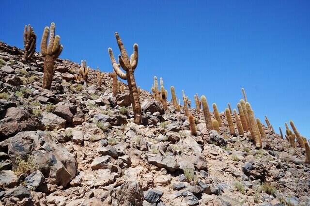 2-cactus-valley