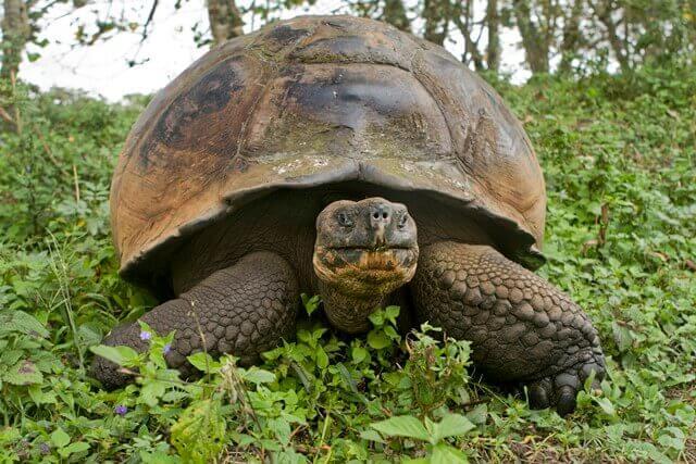 3-tartarugagalapagos
