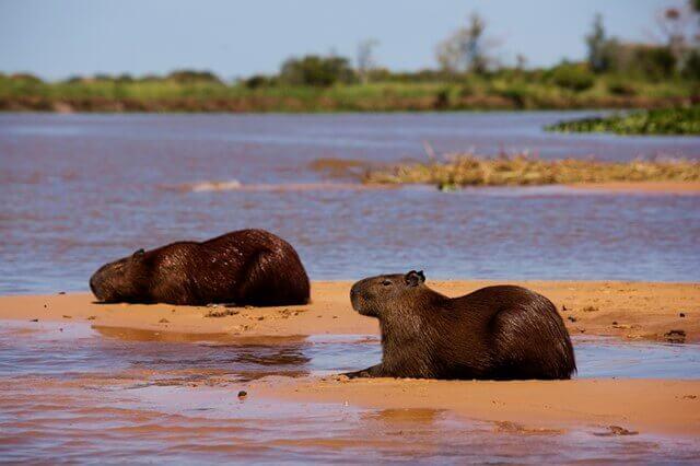 pantanal-of-mato-grosso-brazil