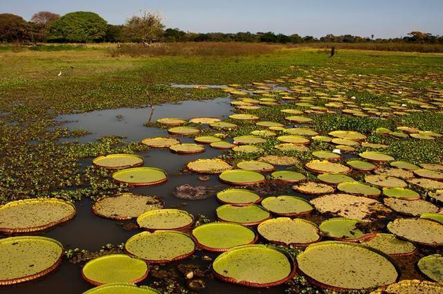 1-pantanal