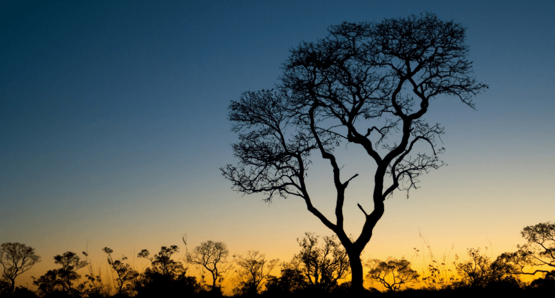 pantanal-ms-e-mt_galeria3