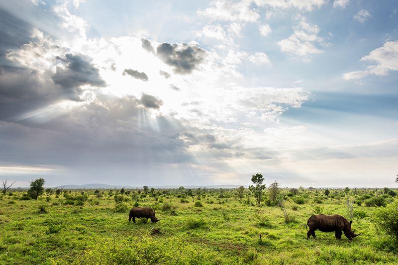 O famoso Parque Nacional Kruger, na África do Sul