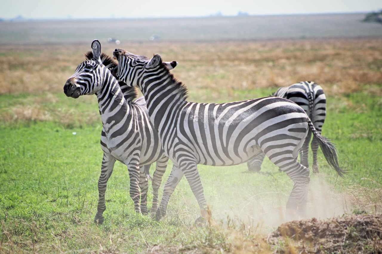 conheca-mais-sobre-a-cultura-da-tanzania-2