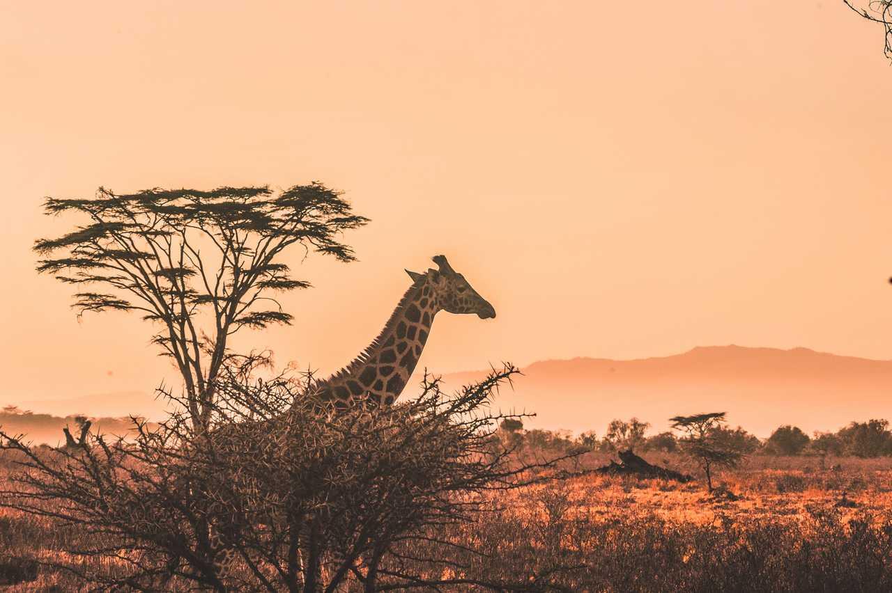 curiosidades-sobre-a-africa-do-sul-para-voce-refletir-sobre-esse-destino-2