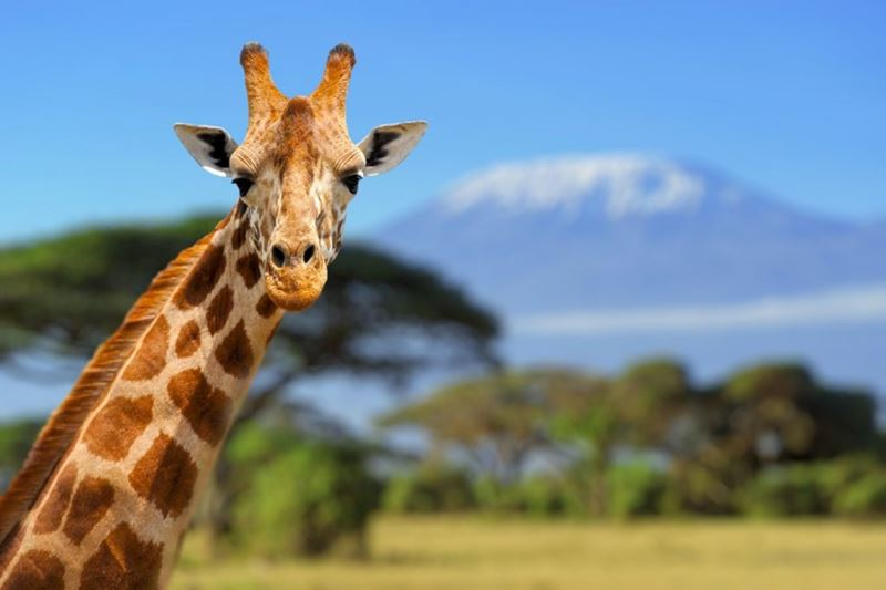 Tanzânia, um dos lugares para conhecer e se apaixonar