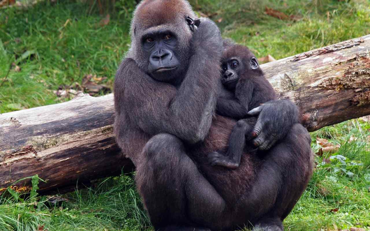 viagens-exoticas-para-fazer-em-2019-ruanda-gorilas
