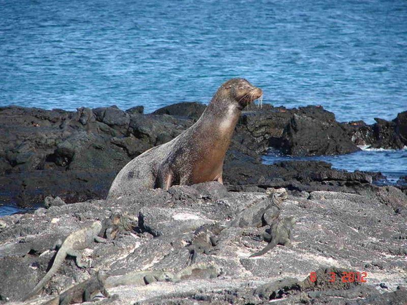 A enorme biodiversidade de Galápagos