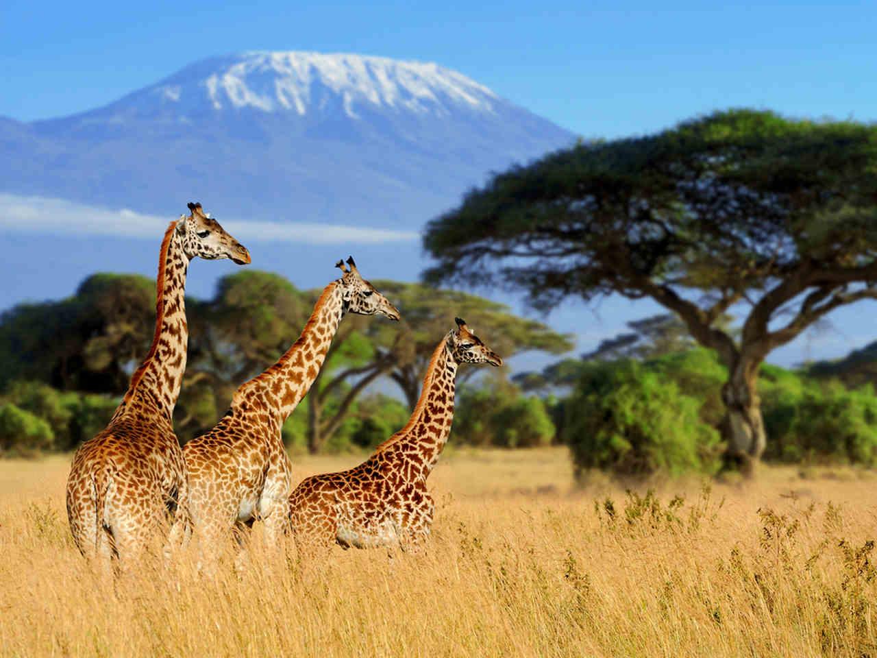 lugares-para-relaxar-e-se-conectar-com-a-natureza-tanzania
