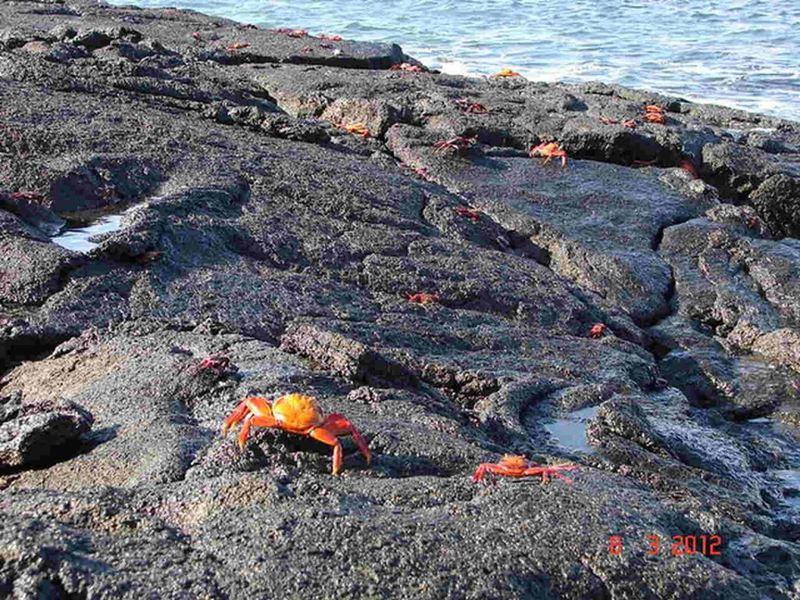 A biodiversidade de Galapagos