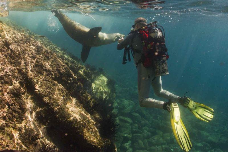 Mergulho, um dos motivos para conhecer Galápagos