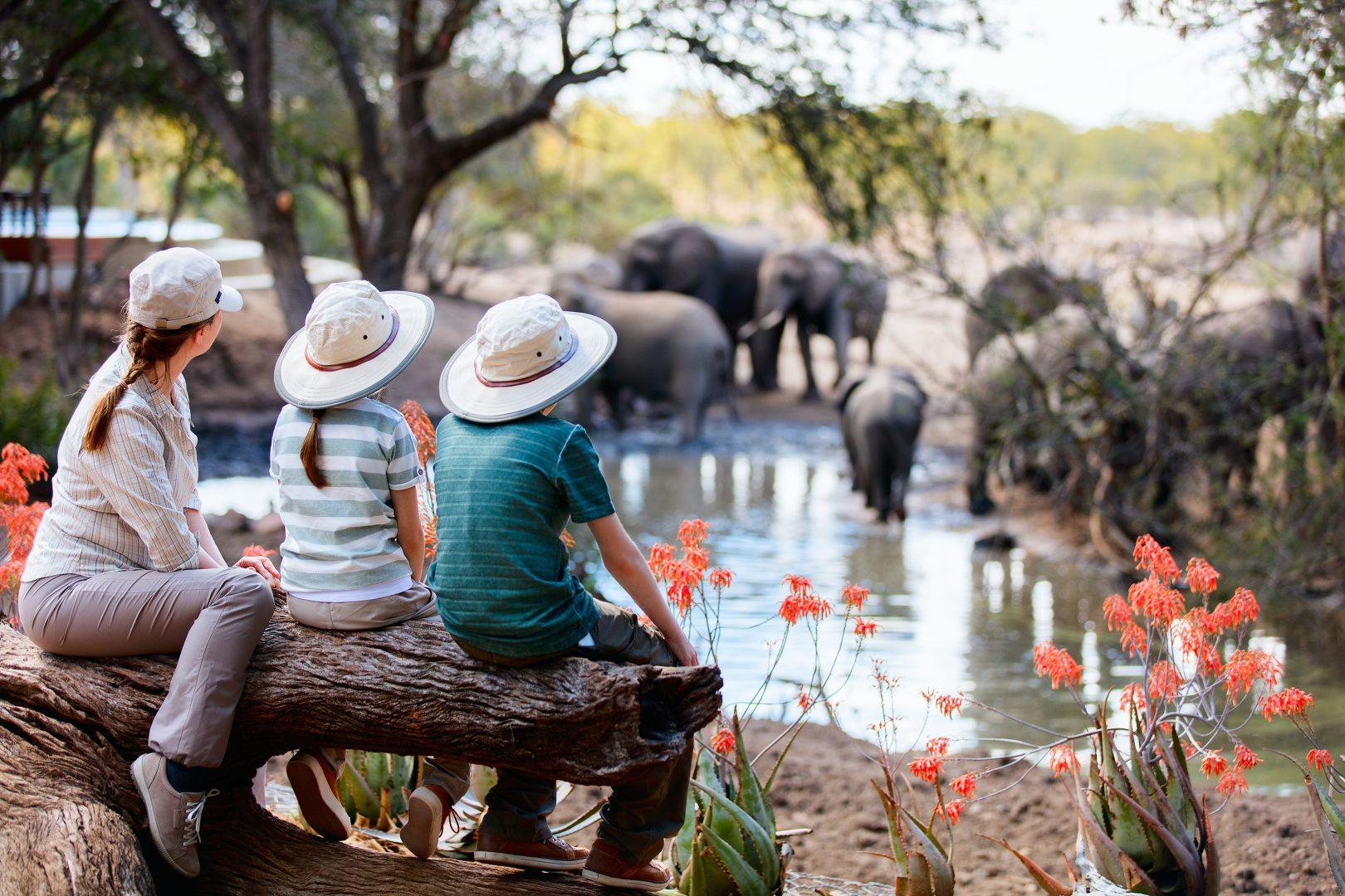 shutterstock_482050255_safari