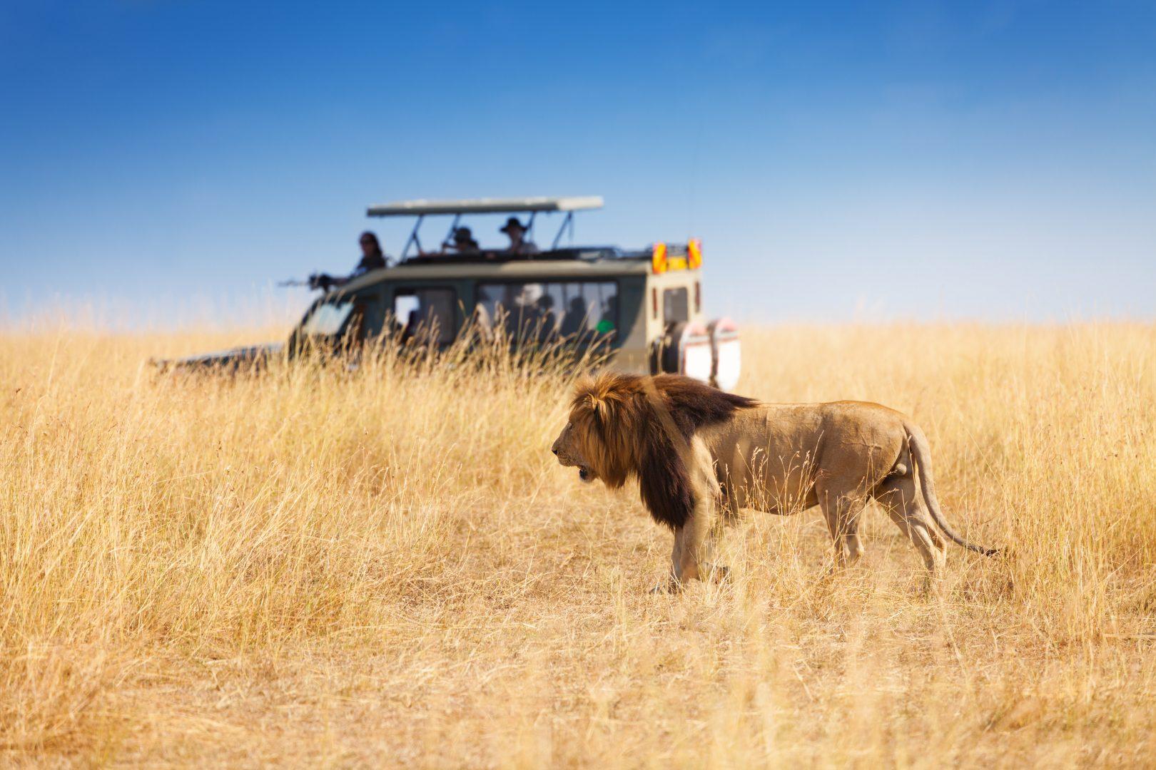 shutterstock_520053802_safari