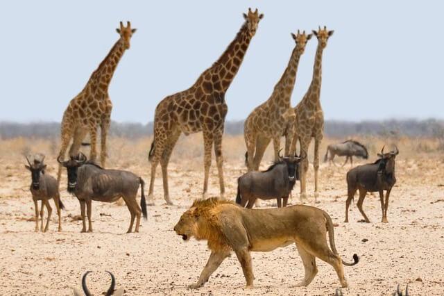africa-1170179_1280-1-1