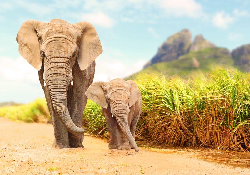Viagem em família para Safari