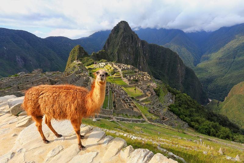 Convivendo com Alpacas e Lhamas em Machu Picchu