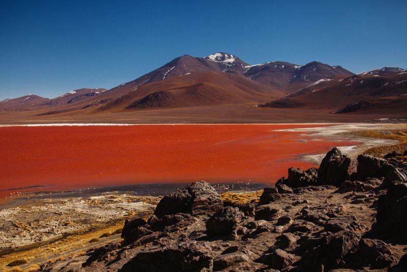 Laguna Colorada, Salar de Uyuni: o que você não pode perder