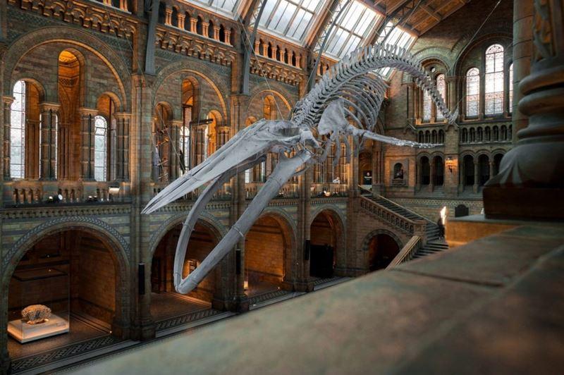 British Museum, conheça o museu virtualmente