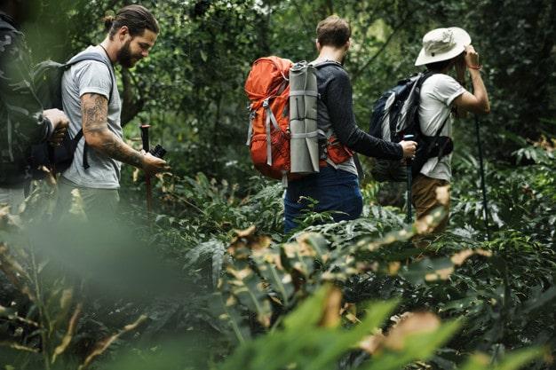 trekking-em-uma-floresta_53876-28-min