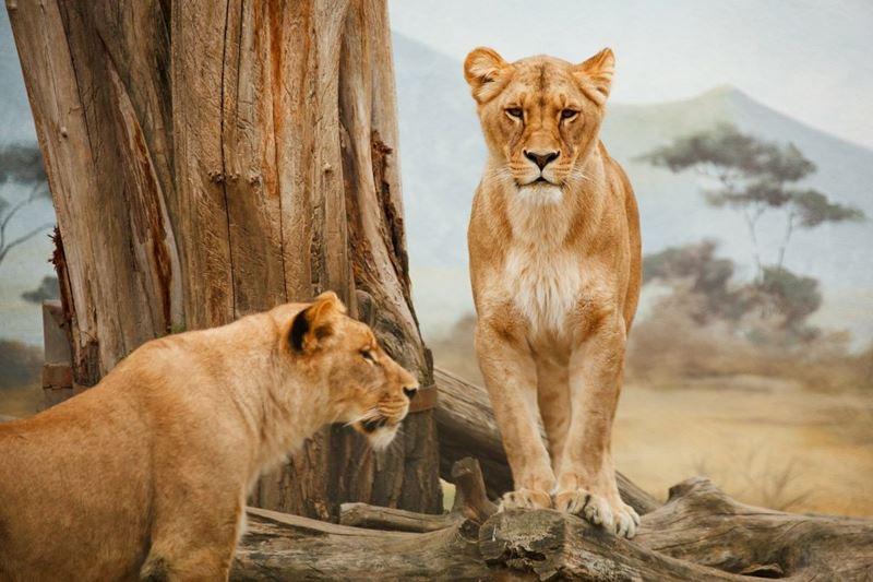 Safari, viagem com o Elemento Fogo