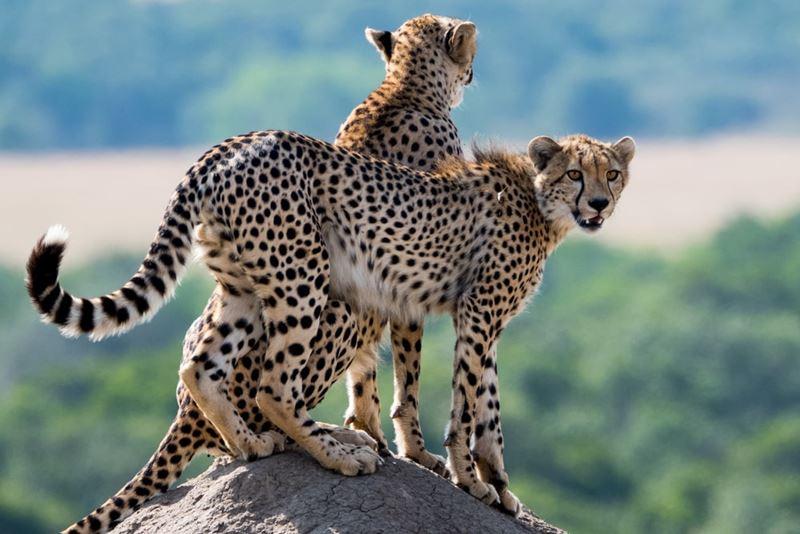 safari-no-quenia-e-na-tanzania-galeria
