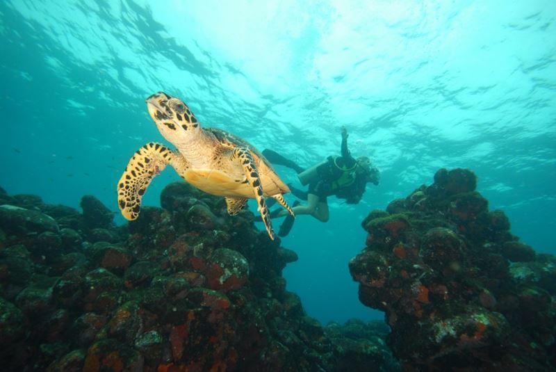 Vida marinha no mergulho de batismo em Fernando de Noronha