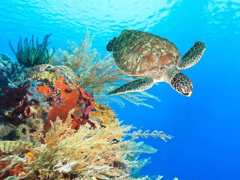 Mergulho autônomo pelo fundo do mar