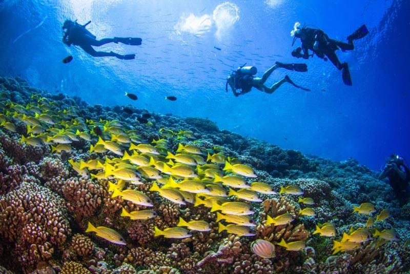 Mergulho e interação com animais no fundo do mar