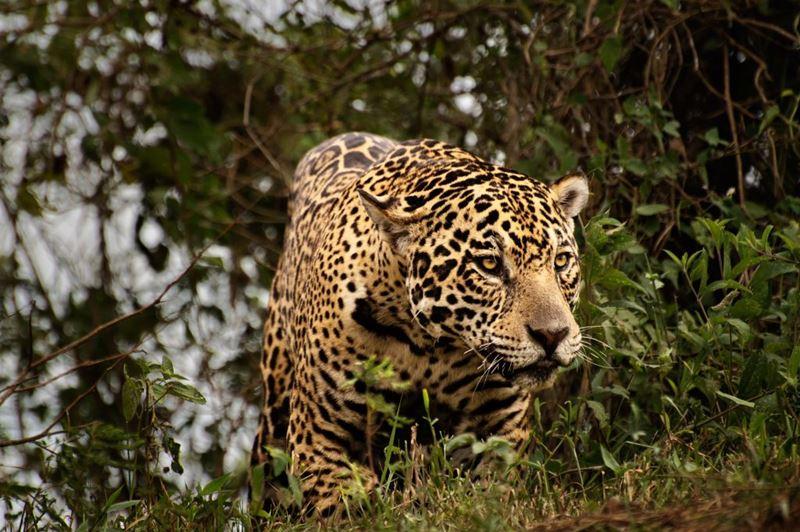 Pantanal, o melhor lugar de aventura para descansar e se divertir no mês de Outubro