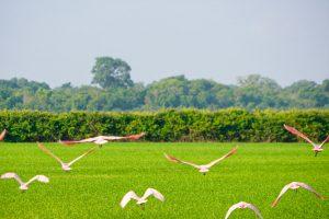 Viagem Re Nunes Parque do Cantão - Observação Pássaros