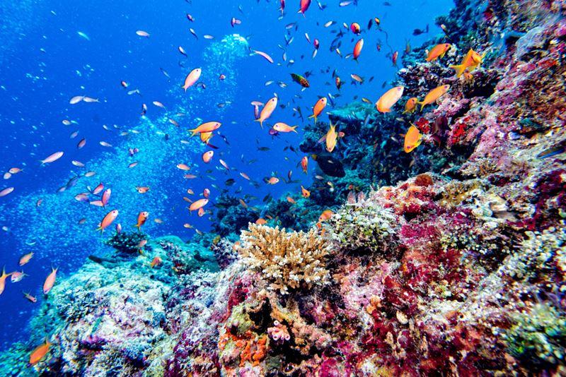 Mergulho nos Corais, um dos passeios para fazer em Maldivas
